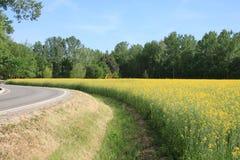 Champ avec les fleurs et la route jaunes photographie stock libre de droits