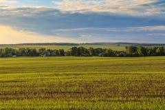 Champ avec les pousses, le village et la forêt de blé Photos libres de droits