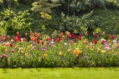 Champ avec les tulipes néerlandaises colorées Images libres de droits