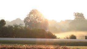 Champ brumeux avec la route au lever de soleil photos stock