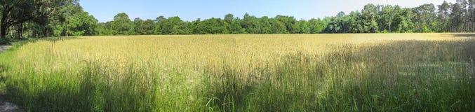Champ d'agriculteurs - région de gestion de faune d'Apalachee Image libre de droits