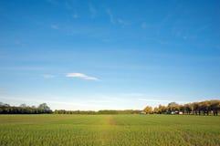 Champ d'agriculture photographie stock libre de droits