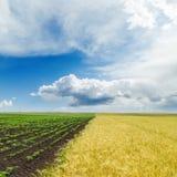 Champ d'agriculture et bas nuages en ciel bleu Photo libre de droits