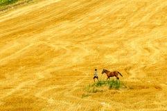 Champ d'automne avec des chevaux et des fils ?lectriques photos libres de droits