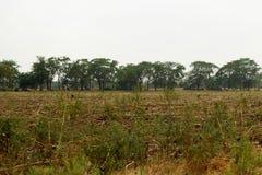 Champ d'automne avec les arbres et l'herbe jaune Photos libres de droits