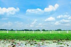 Champ d'automne d'arbre d'herbe avec la barrière et le ciel bleu Images stock