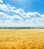 Champ d'or et bas nuages en ciel bleu Photographie stock