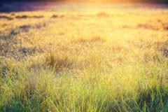 Champ d'herbe d'été avec des fleurs, concept abstrait de fond, foyer mou, bokeh, tons chauds Photos stock
