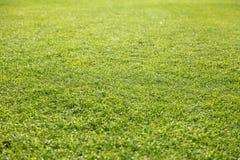 Champ d'herbe Image libre de droits