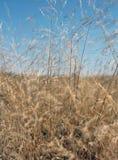 Champ d'herbe d'automne Jour ensoleillé Ciel bleu photographie stock libre de droits