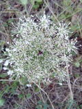 Champ d'herbe blanc de jardin d'agrément d'usine Images libres de droits