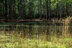 Champ d'herbe de marais avec le lac et les arbres Photo stock