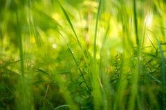 Champ d'herbe de pré Image libre de droits
