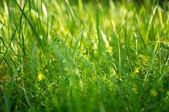 Champ d'herbe de pré Images stock