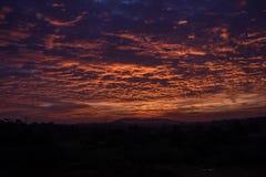 Champ d'herbe et de coucher du soleil de ressort Image stock