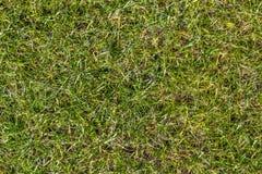 Champ d'herbe jaune vert au ressort Photographie stock