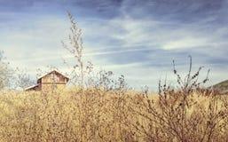 Champ d'herbe sèche avec la vieille maison en fond et ciel dramatique photo libre de droits