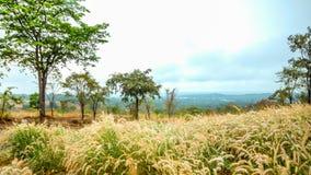 Champ d'herbe sur la montagne Photographie stock libre de droits
