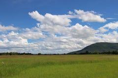 Champ d'herbe sur le ciel blanc bleu Photo libre de droits