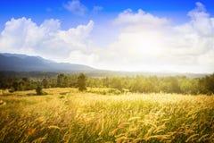Champ d'herbe, Thaïlande Image libre de droits