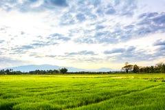 Champ d'herbe verte Photographie stock libre de droits