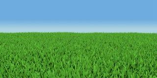 Champ d'herbe verte Images libres de droits