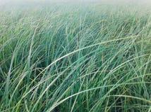 Champ d'herbe verte Photos libres de droits