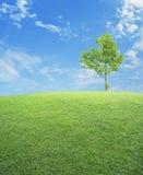 Champ d'herbe verte avec l'arbre au-dessus du ciel bleu Photos stock