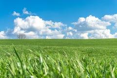 Champ d'herbe verte, ciel bleu, nuages blancs et un arbre Image libre de droits