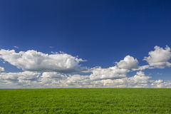Champ d'herbe verte et ciel bleu avec des nuages Fond idéal dans le concept de l'ÉCOLOGIE et de la NATURE Photos libres de droits