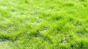 Champ d'herbe verte Les épillets se penchent dedans banque de vidéos