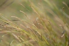 Champ d'herbes de Brown avec le soleil photos libres de droits