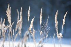 Champ d'hiver Images libres de droits