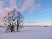 Champ d'hiver et arbres, Lithuanie Photographie stock libre de droits