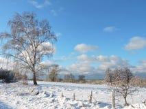 Champ d'hiver et arbres, Lithuanie Photos stock
