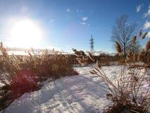 Champ d'hiver tranquille, jour ensoleillé sans vent Images libres de droits
