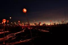 Champ d'installation légère uluru de tjuta de stationnement national de kata Territoire du nord l'australie photographie stock libre de droits