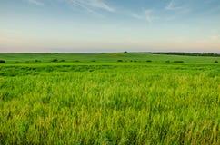 Champ d'une herbe verte et d'un ciel bleu Photos stock