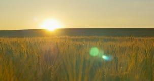 Champ de blé à l'aube ou au coucher du soleil s'orienter banque de vidéos