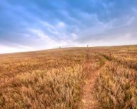 Champ de blé avec l'herbe jaune en automne, Ukraine photos stock