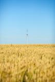 Champ de blé avec le ciel bleu et le poteau électrique Photographie stock libre de droits