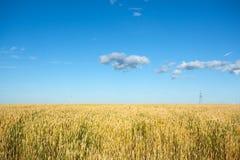 Champ de blé avec le ciel bleu et le poteau électrique Photo stock