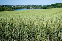 champ de blé avec les épillets de maturation à l'arrière-plan du village photographie stock libre de droits