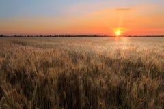 Champ de blé de coucher du soleil Photographie stock