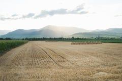 Champ de blé d'été avec des meules de foin et des montagnes dessus Images libres de droits