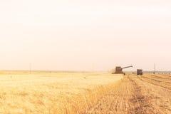 Champ de blé d'or avec le ciel bleu à l'arrière-plan pendant les harves images stock