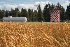 Champ de blé dans l'aéroport Photographie stock