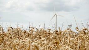 Champ de blé dans le vent et les turbines de vent de rotation blanches banque de vidéos