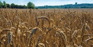 Champ de blé de Cheshire Images stock