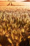 Champ de blé de foyer comme fond Photos stock
